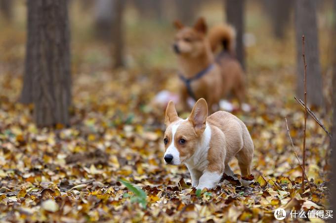 我家狗子的那些事儿 - 与蠕形螨的斗争之路