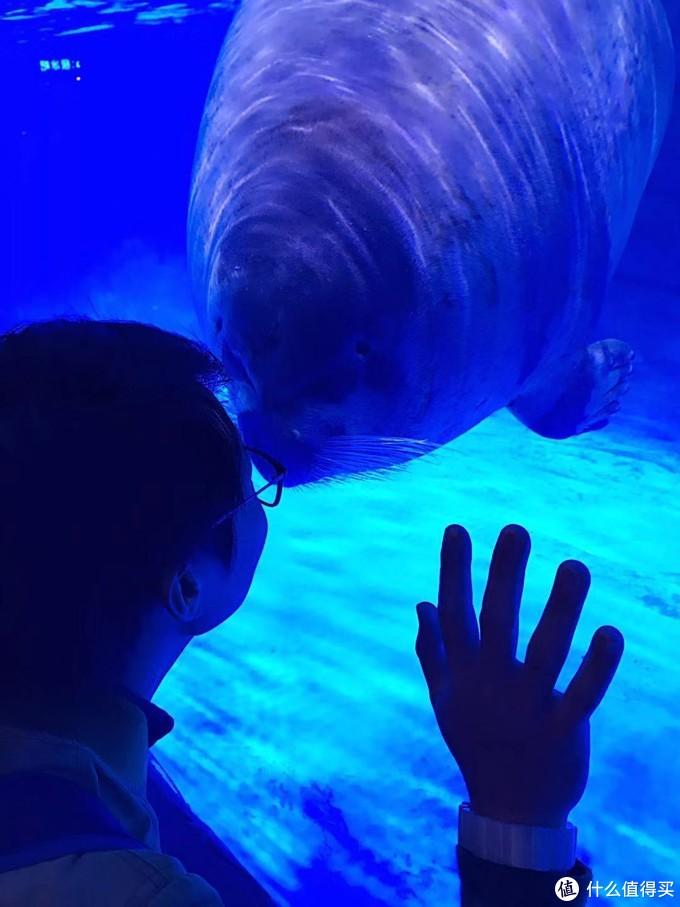 上海海昌水族馆游记~重点是最后跟网红海豹拍照的秘籍~