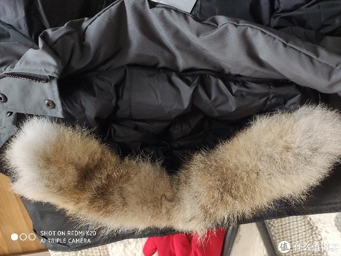 南京实体店购加拿大鹅。
