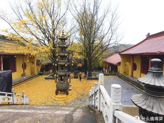 百年历史的银杏树