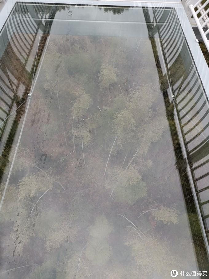 新建的天桥,玻璃很透明,但是参照物较近,不至于吓到爬行