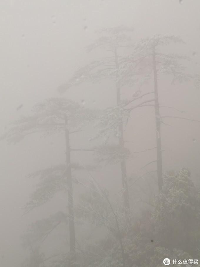 不一会,完全一头扎入云雾中,只能看见近处的一些大块头雪松