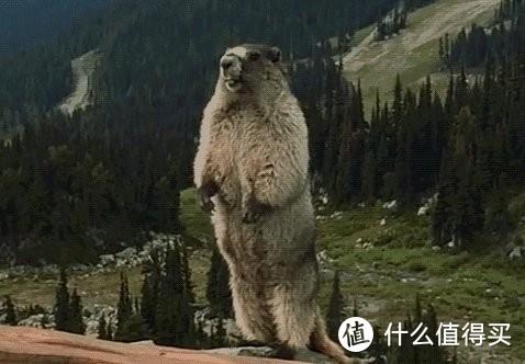 骚气冲天--marmot土拨鼠m3分享(内有真人兽)