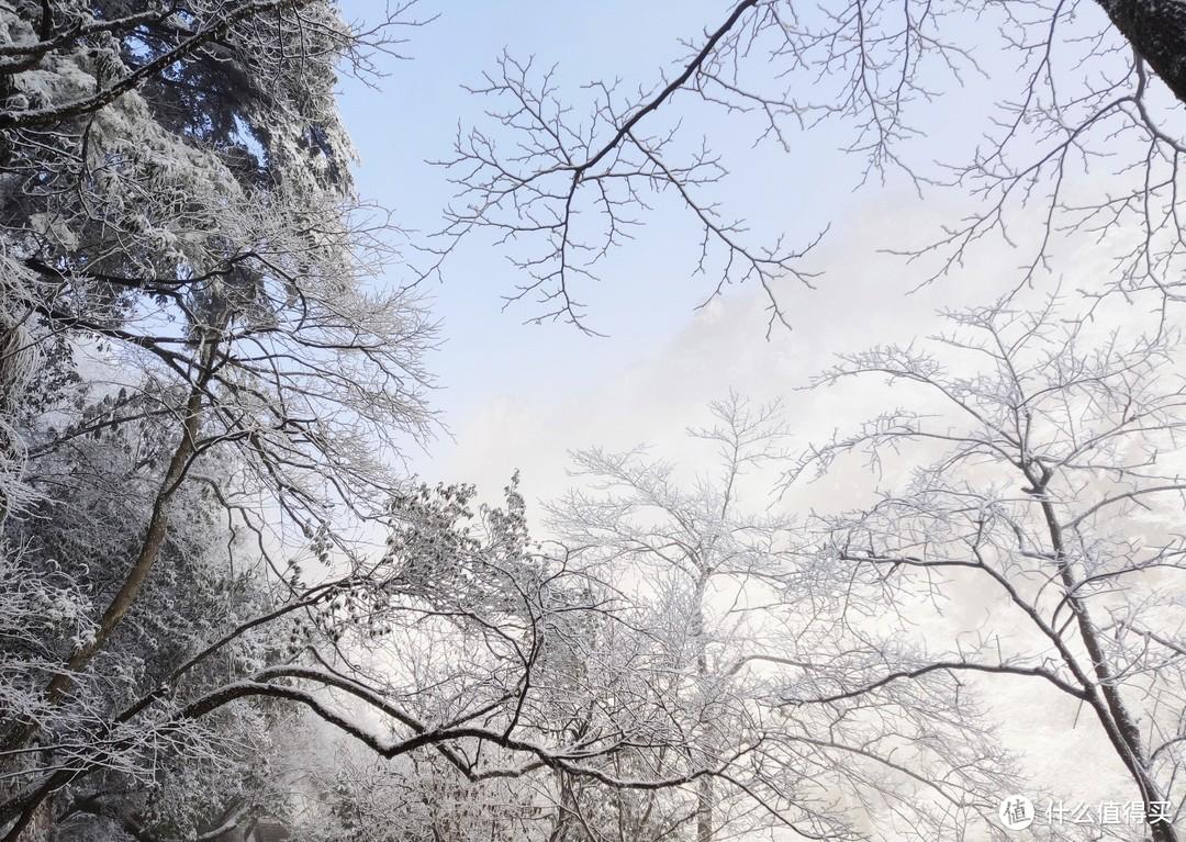 雾凇or雪景