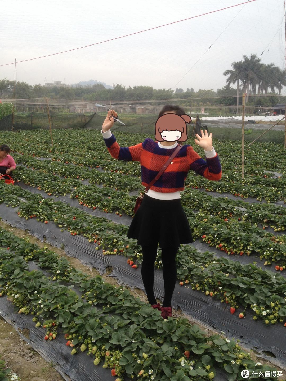 厦门的冬天不太冷,这一张是春节前去摘草莓拍的,衣服都是网购的,上衣短款,呢料,很厚实,下身是高腰双面针织短裙,鞋子是酒红色漆皮蝴蝶结,不太好配裤子,一般都是配短裙。