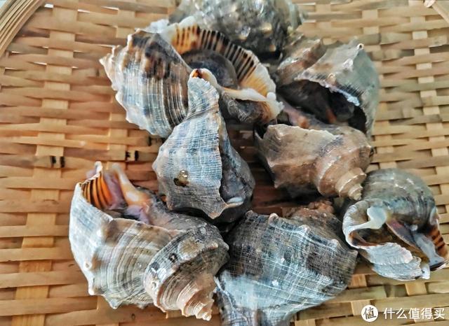 冬天这海鲜最鲜美,老公隔三差五就馋它,煮完拌一拌,比吃肉过瘾