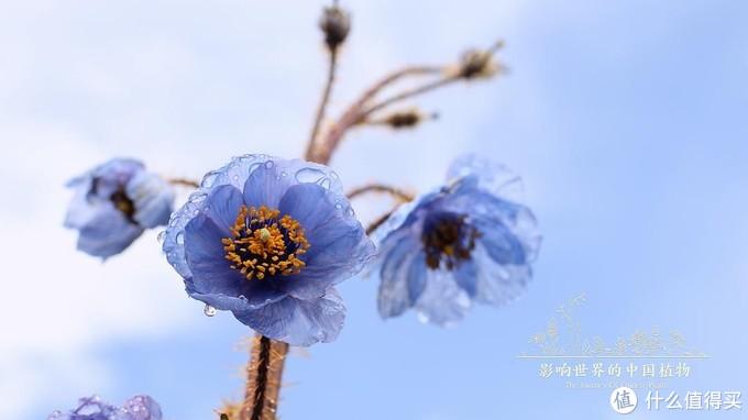 《影响世界的中国植物》剧照(国内首部4K超高清植物类纪录片)