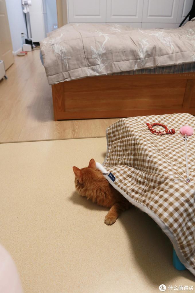 一人一猫,魔都一室户装修入住周年心得
