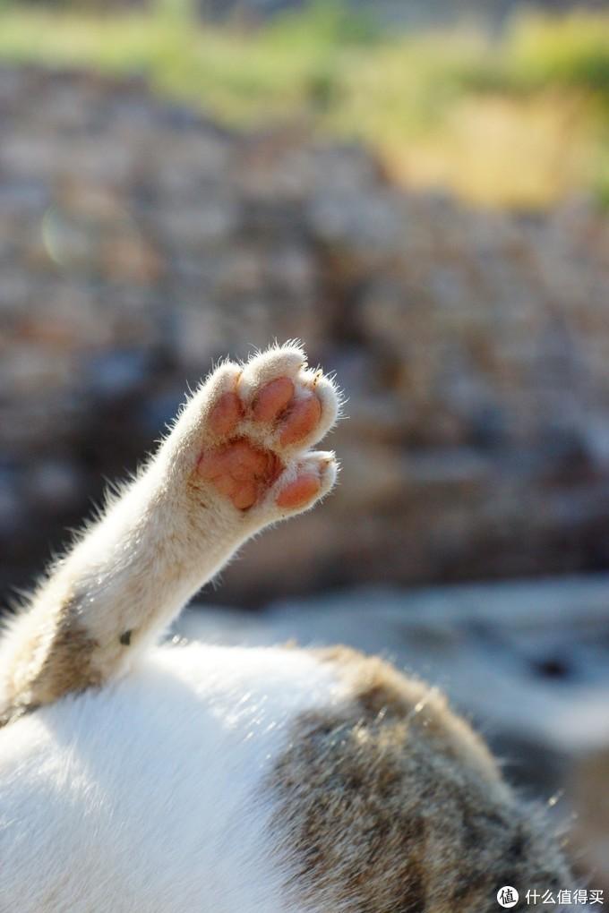 我要带你去浪猫的土耳其(之一/序篇)【3万字多图游记】