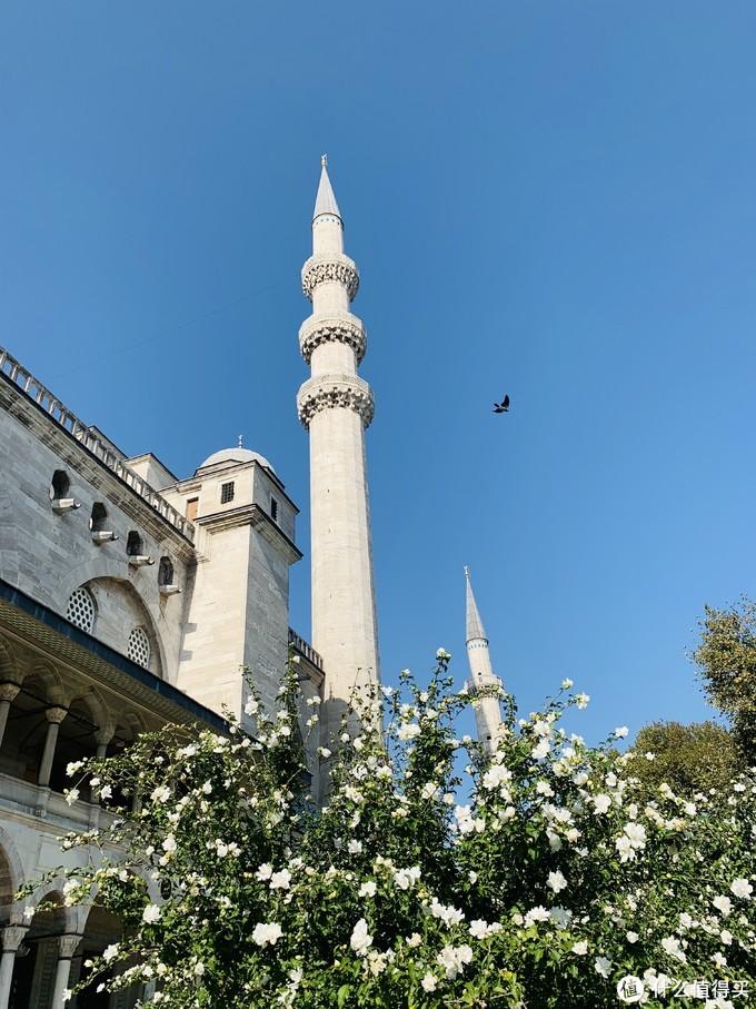 我要带你去浪猫的土耳其(之二/伊斯坦布尔篇)【3万字多图游记】