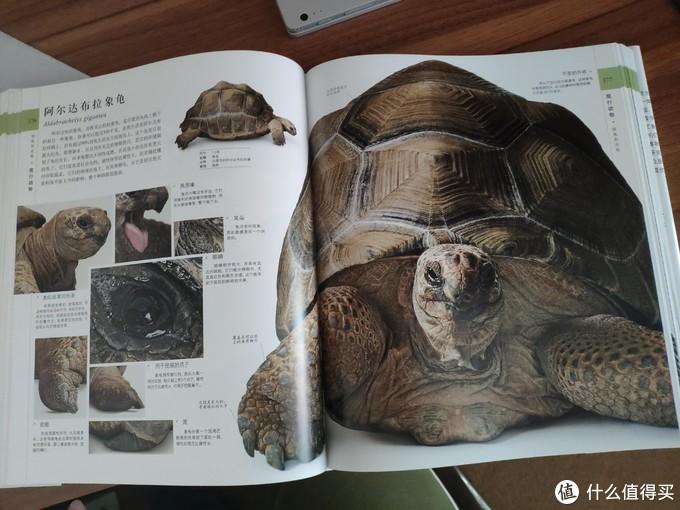 好像龟仙人的龟啊
