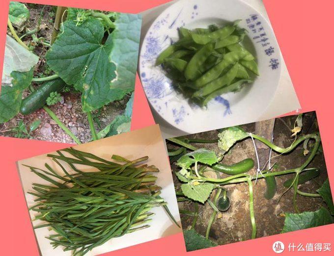 小黄瓜+大蒜+荷兰豆
