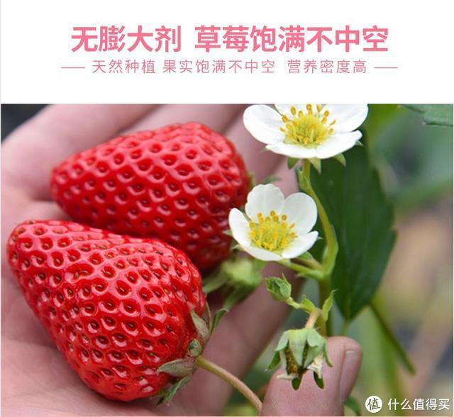 一闻就知道!自然熟!无农残!99红颜冬草莓!