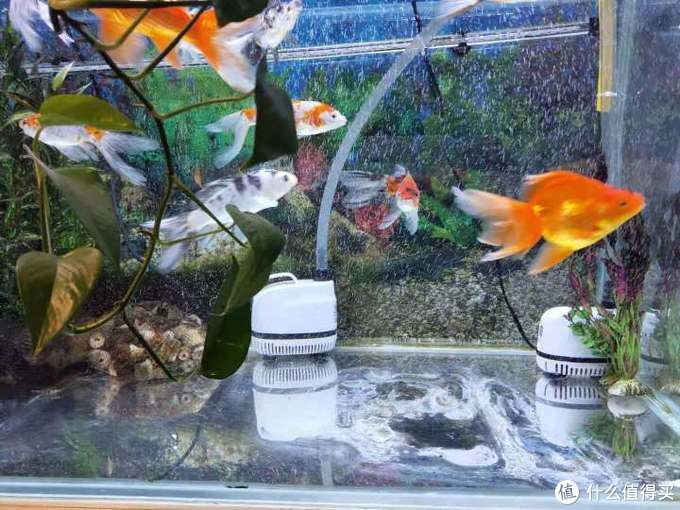 打造属于鱼儿的智能家居