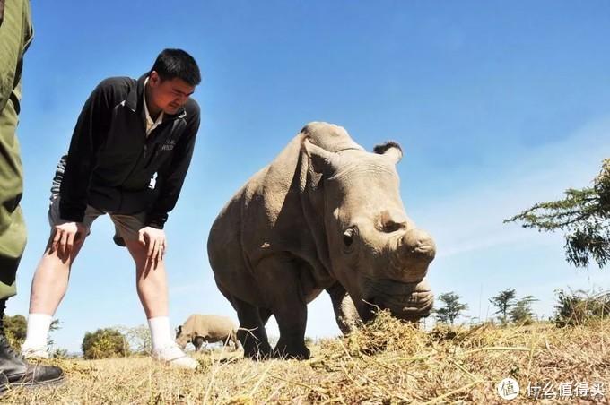 大姚去看最后一只北方白犀牛-苏丹(已离世)