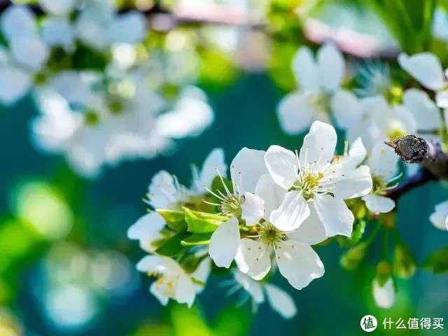 春天过后,一起去赏花把