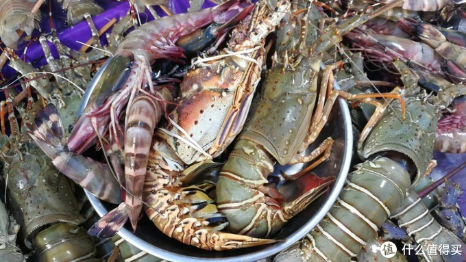 盆里的这一堆,3只老虎虾,2条龙虾一共300马币