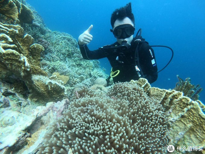第一次体验式深潜就在这里了,这里的珊瑚保护的很好,五彩缤纷