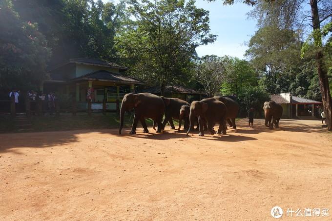 大象孤儿院和令人失望的科伦坡