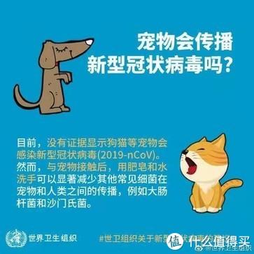 疫情期间,宠物饲养指南