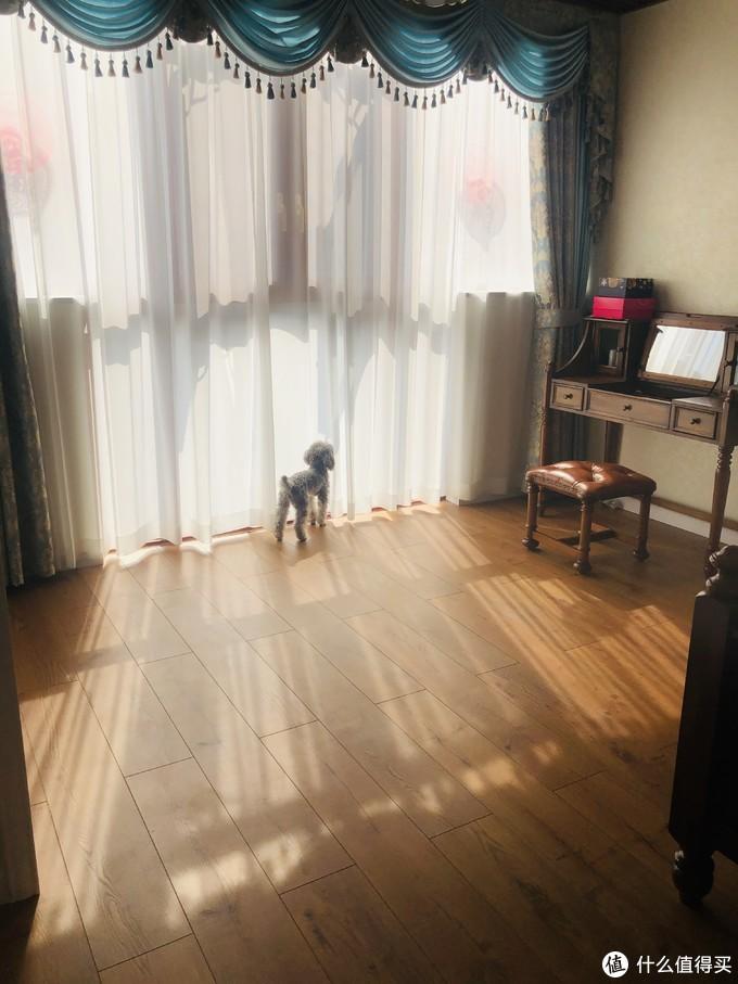 主卧的阳台,上面做了生态木吊顶,爱晒太阳的狗狗,喜欢站在这里