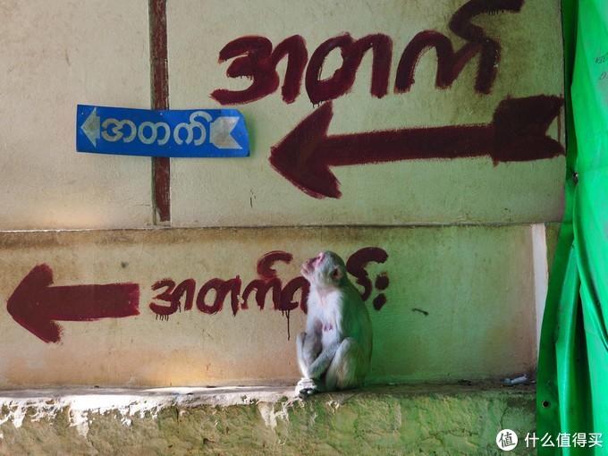哪哪都是塔——缅甸·蒲甘怎么玩