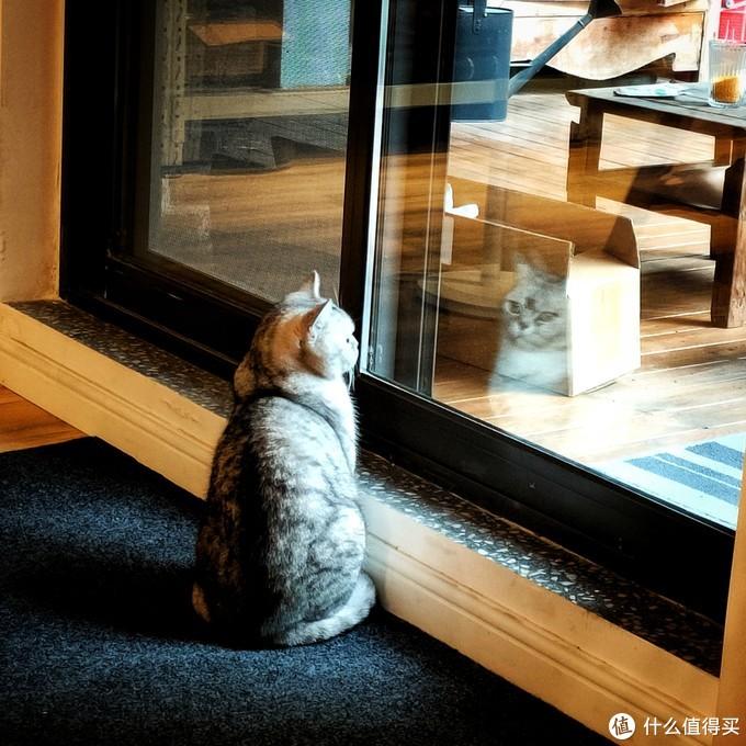当然猫对外面是很向往的,门一打开就会暴冲出去。但是为了我们床单的干净。只能有控制的放他偶尔出去玩玩