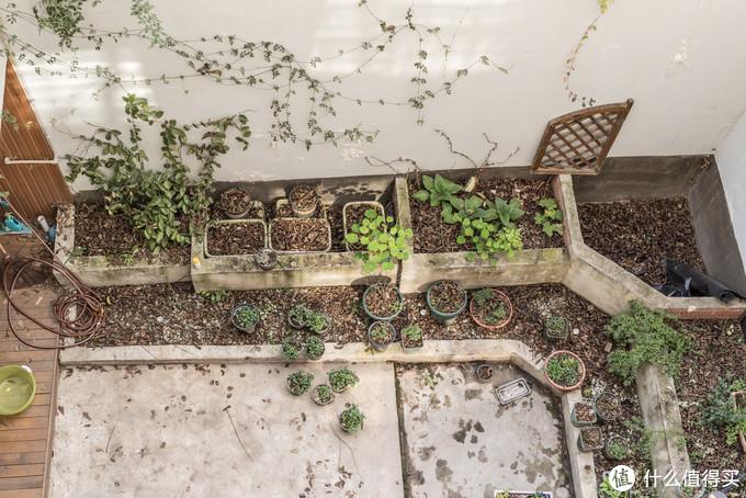 现在天井的植物还不成样子,要这个春天努力了