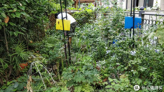 当然它还可以长得更满……到盛夏时分完全变成丛林...
