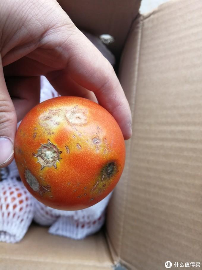 攀枝花的西红柿和山东小南瓜