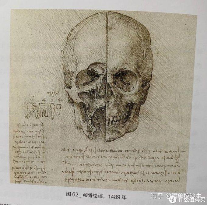 人颅骨的研究