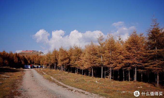 道边的树林 很秋天