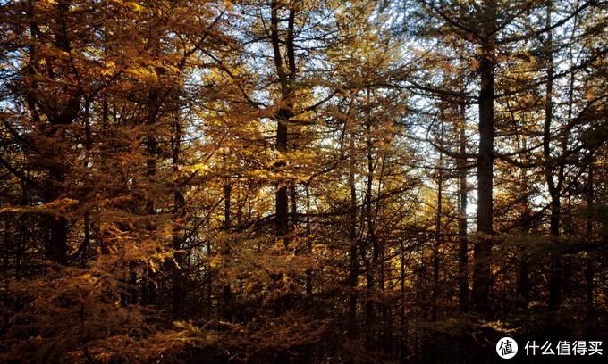 阳光穿过密林 压缩过度 原图很锐