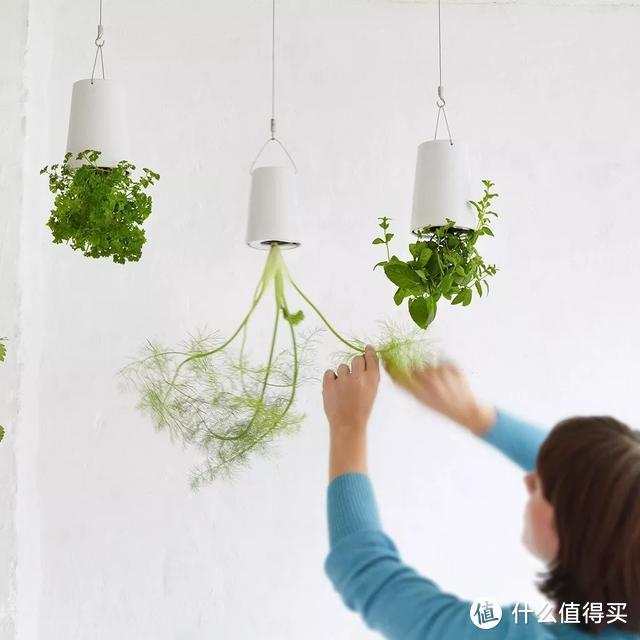 """外国人发明的""""室内小菜园"""",一年四季长爆盆,太神奇了..."""