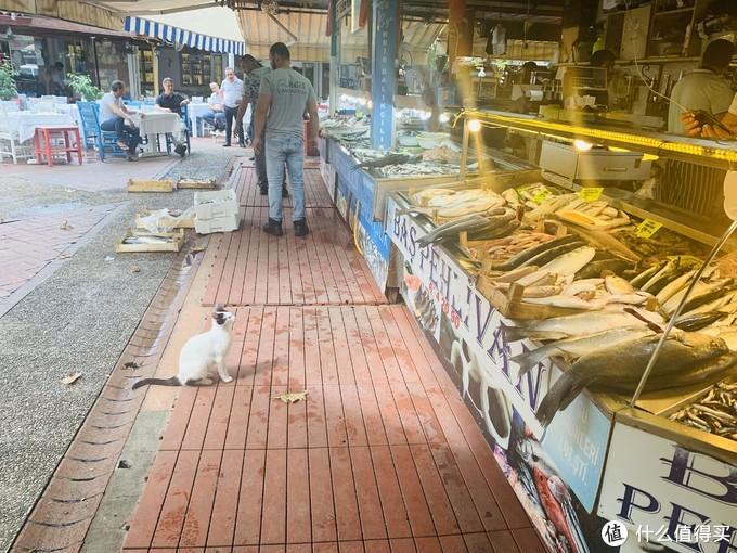 我要带你去浪猫的土耳其(之五/费特希耶/卡什篇)【3万字多图游记】