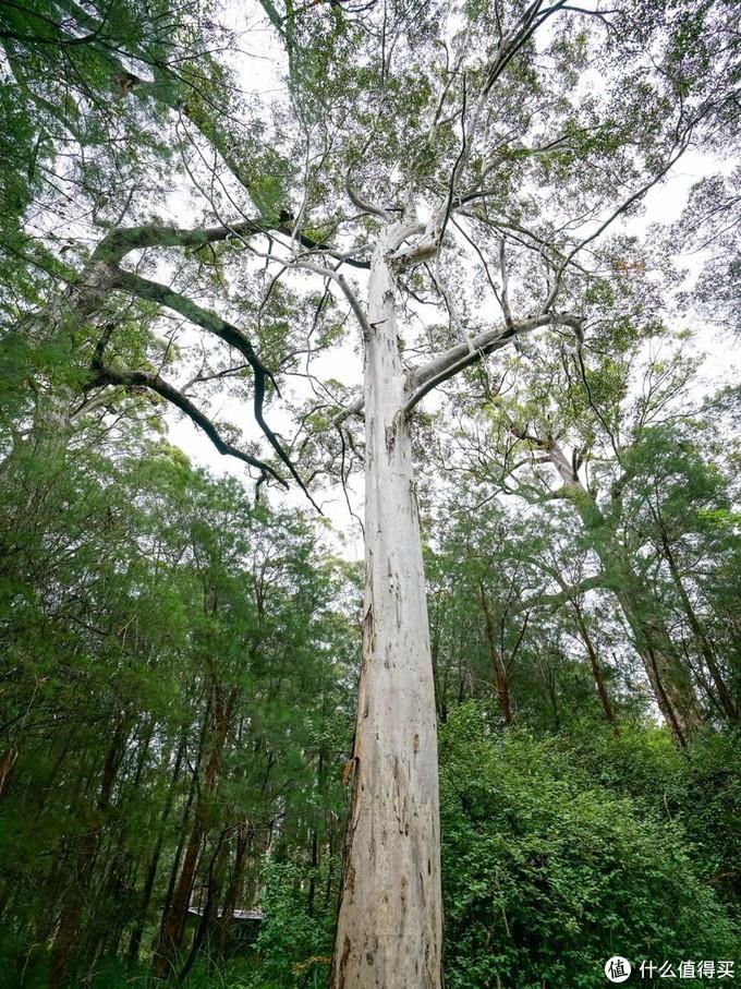 神奇的世界!巨人谷树顶漫步