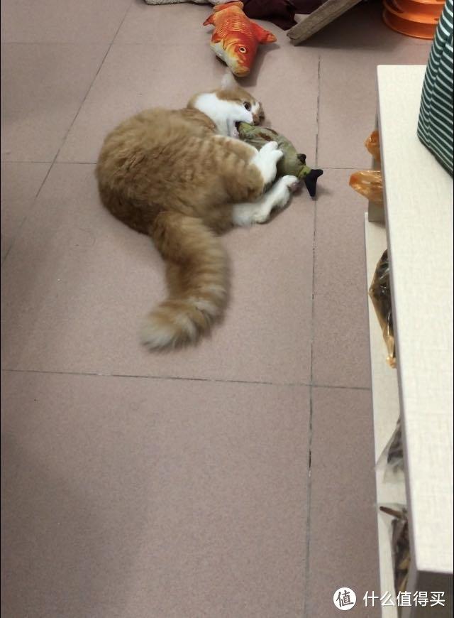 养猫系列之二:猫咪用品的选择