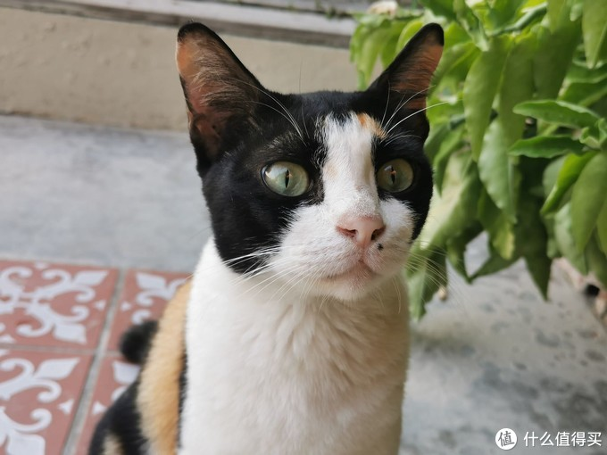 这只猫从酒店前台跟着我一直到房间门口,好可爱