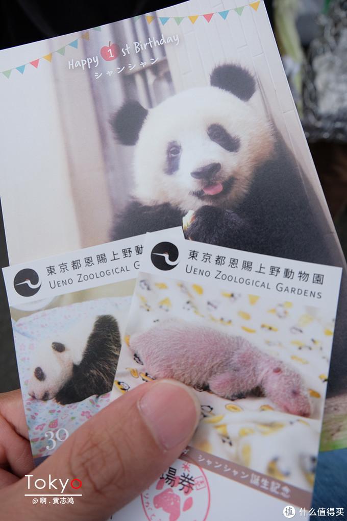 来上野动物园的唯一目的——熊猫