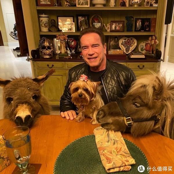 州长施瓦辛格亲传宅家通知,撸动物玩不比出门瞎转悠更爽?年过七十童心依旧