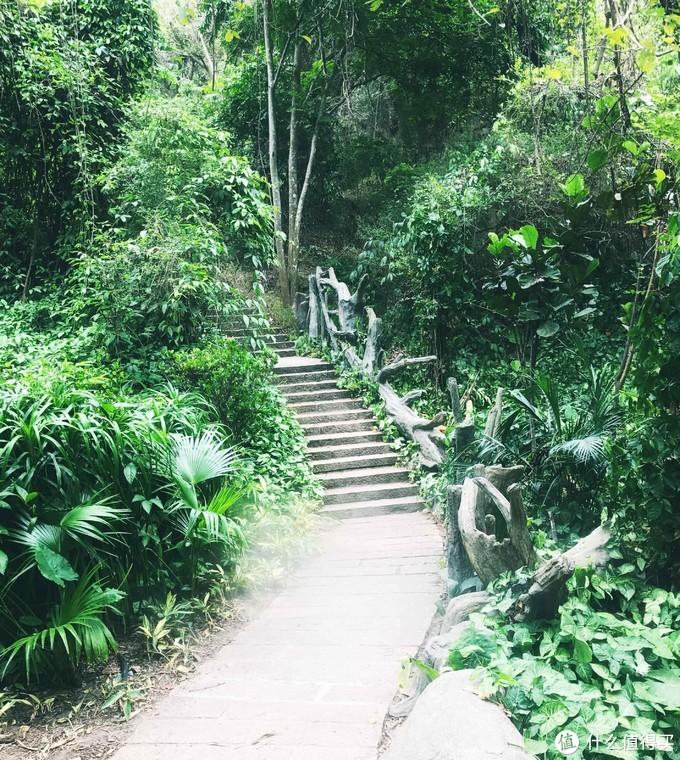 植被环绕的小桥