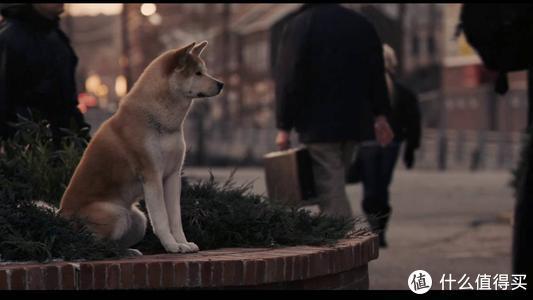 《忠犬八公》剧照