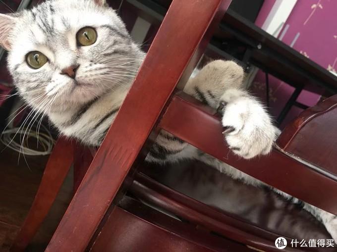 如何给主子选购猫粮