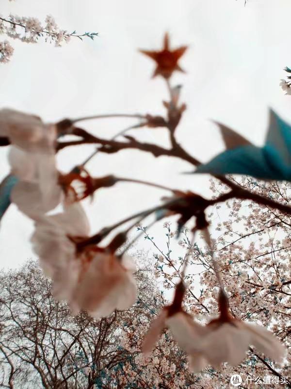 2011年摄于武大