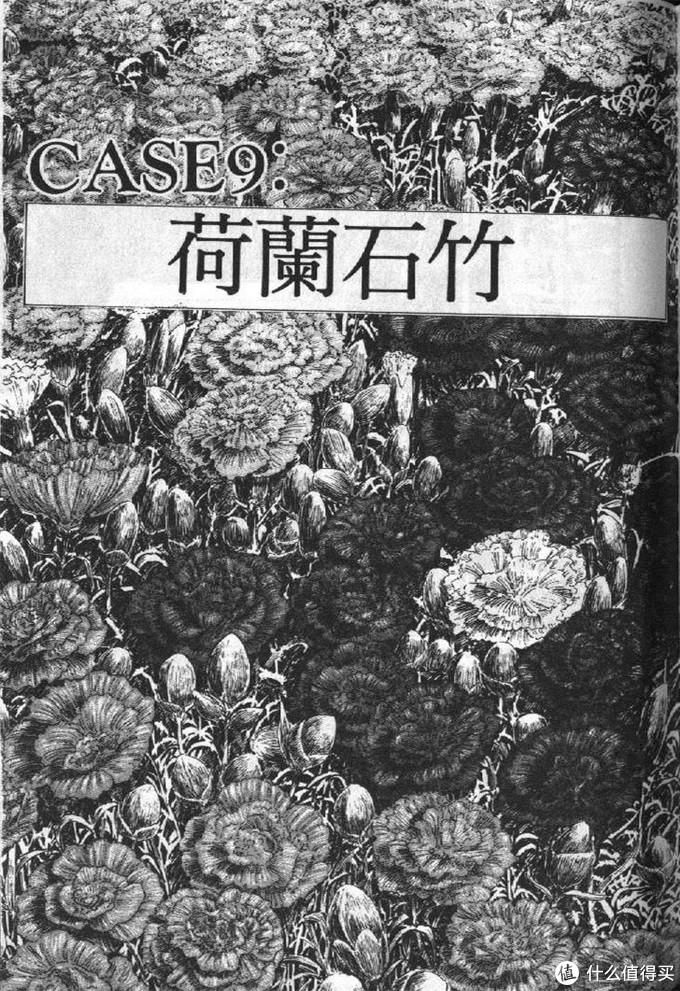 漫画内页代表植物——荷兰石竹