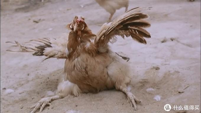 你还记得那只被点中了的鸡么?