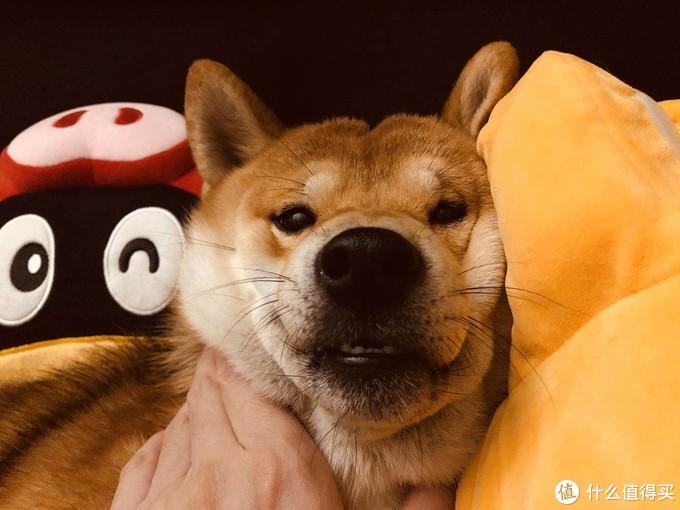 开心的狗子