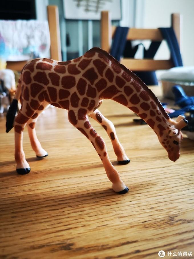 吃草长颈鹿