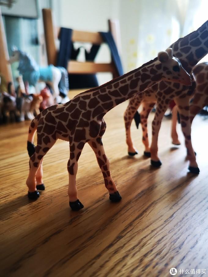 长颈鹿宝宝