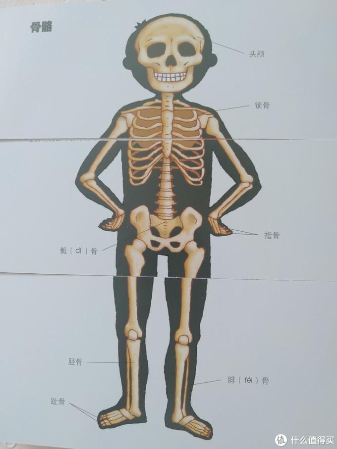 一起认识我们的身体&育儿经验—4D绘本《我们的身体》展示